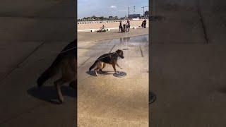 Dog Tries to Catch Water Fountain || ViralHog