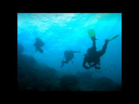 Red Sea Diving Stills