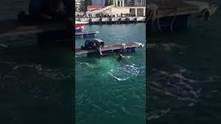 Порт Сочи.Белуха