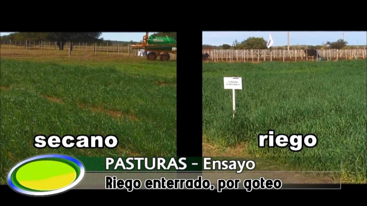 Riego enterrado por goteo en el valle argentino la pampa - Tuberias de riego por goteo ...