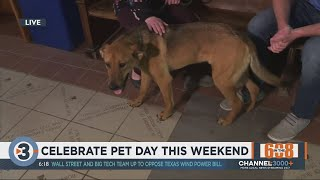 In The 608: Celebrate National Pet Day This Weekend With Dane County Humane Society
