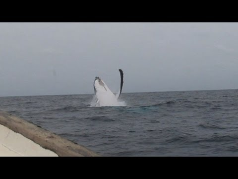 Off the coast of Gabon visitors discover whale watching para
