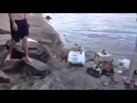 Incredible response when the dog owner is in danger 2014