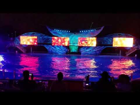 Light Up the Night ~ SeaWorld Orlando
