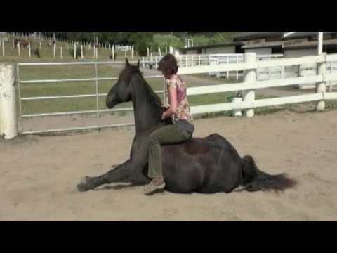 15 Horse tricks and skills. Clicker Training. Liberty groundwork. Bob the horse.