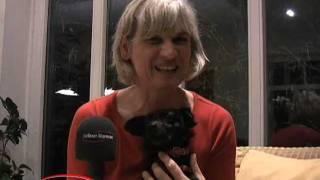 """Frauchen Gesucht: Neues Von Fernsehhund """"estrella"""""""