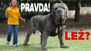 Největší pes na světě? ✅ / ❌