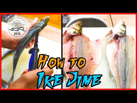 IKE JIME - How To Do It And Why (BLEEDING THE FISH)