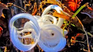 Frost Flowers 2