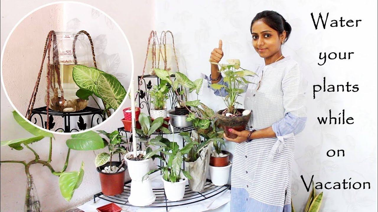 This idea will water your plants while on vacation   छुटियों पे जाने से  पहले, कर दें ये काम