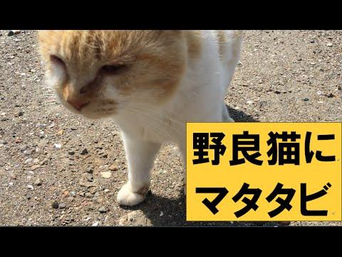 野良猫にマタタビ