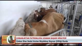 Çobanlıktan Büyükbaş Hayvan Çiftlik Sahibi Oldu tarim.site