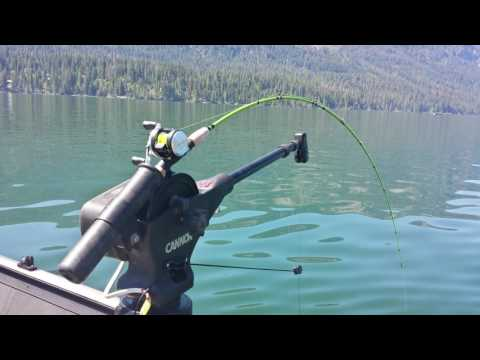 Lake Wenatchee Sockeye 2016