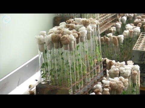 Новосибирские учёные будут выводить новые сорта картофеля