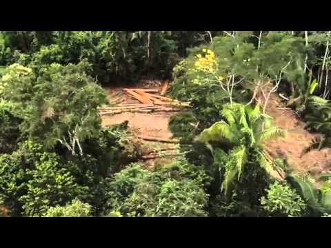 Amazon Deforestation & Slavery   Toxic   VICE