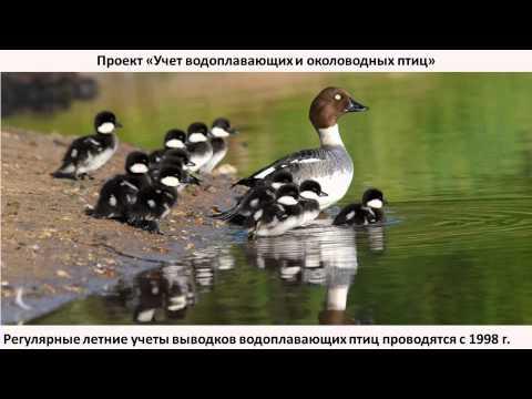 Проекты программы Птицы Москвы и Подмосковья