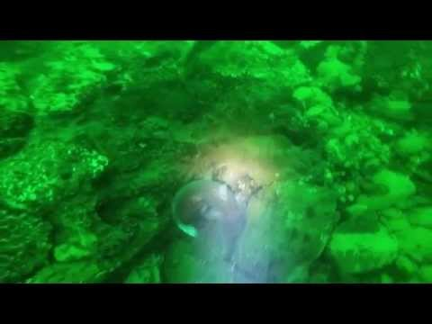 Scuba Diving the extreme Columbia River Canyon