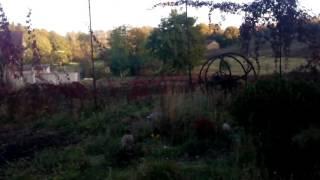 видео Грибы на садовом участке.
