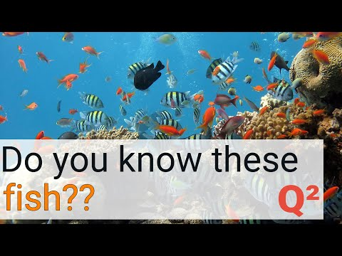 Guess The Fish! Do You Know The Species? Animal Quiz #7