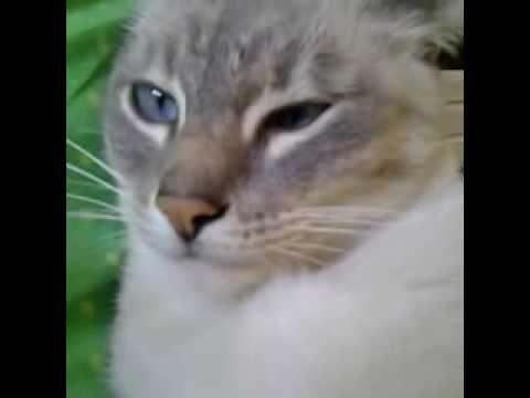 FALLS ASLEEP CAT – VINE