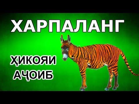 Достони ачоиб пандомуз ХАР ДАР ЛИБОСИ ПАЛАНГ