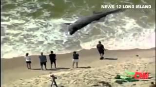 Видео животные тихого океана. Огромную акулу выбросило на берег после шторма!