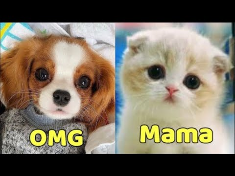 Funny and Cute Pets kittens & Puppies  -  Cats & Dogs Moments Compilation - Pets Ya