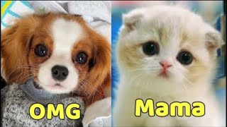 Funny and Cute Pets kittens & Puppies  Cats & Dogs Moments Compilation  Pets Ya