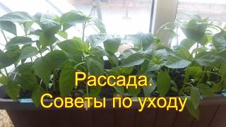 видео 7 советов по выращиванию рассады