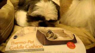 Pokerface The Shih Tzu In His Thermo Pet Cuddle Cushion Heated Bed