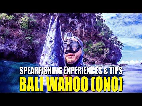 INDONESIA SPEARFISHING TIPS & EXPERIENCE WAHOO (ONO/ TENGGIRI LAKI)