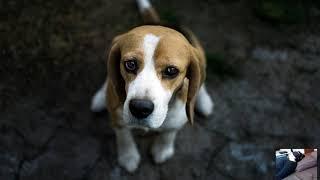 Собаки и кот болеют Удаление причин