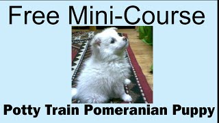 **hoot** Potty Train Pomeranian Puppy - Free Mini-course On Potty Train Pomeranian Puppy