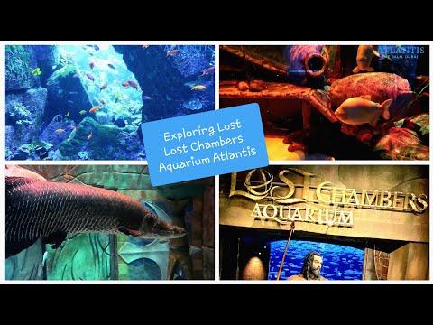 Exploring the Lost Chambers Aquarium Atlantis Dubai