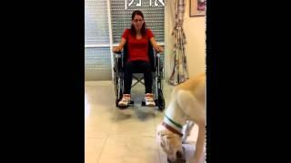 בוני כלב שירות - רוץ בין כלבים