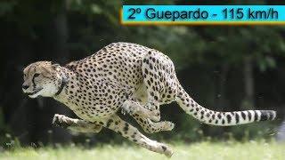 Топ 5 самых быстрых животных в мире