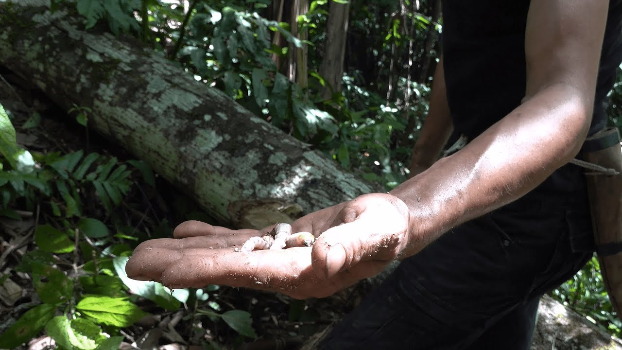 Wood Worms and Bye Monkey, Wilderness Alone, Episode 44