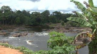 Surinam. Pingpe & jungle, Back-to-Basic?
