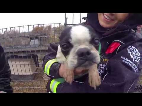 100+ Animals Rescued from Puppy Mill and Cruelty Situation