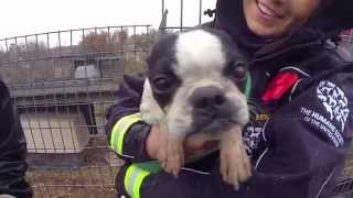 100 animals rescued from puppy mill and cruelty situation