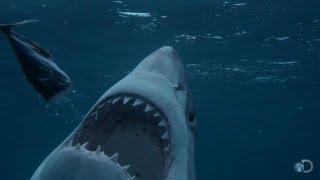 Is There a Serial Killer Shark?   Shark Week 2013