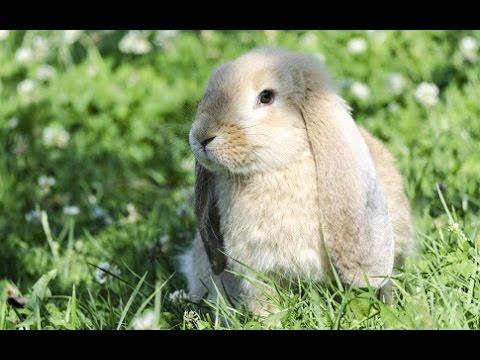 Los Conejos Como Mascotas La Granja De Los Conejos Tvagro Por Juan Gonzalo Angel Youtube