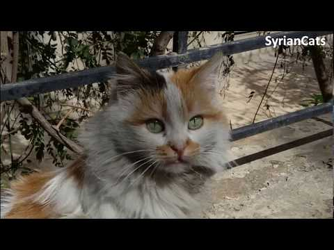 Best shots of Syrian cats | 2017