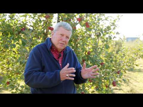 BHTV: Local Hard Cider is a Big Draw in Western North Carolina
