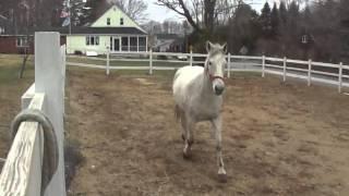gray horse arrives 2