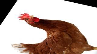 rap about farm animals