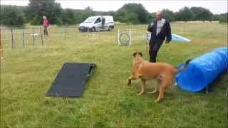 Paws At The View Chingford 2015 - Agility With Elite Dog Training