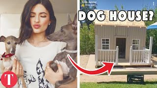 10 Celebrity Pets Who Have A Better Life Than You