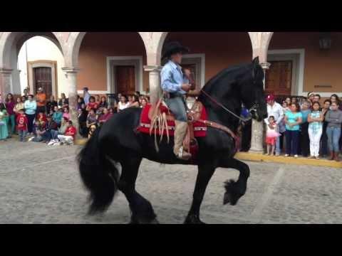 Sebastian González en la presentación de caballos bailadores. Unión de San Antonio, Jalisco 2013.