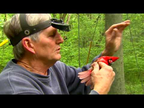 Conservation Connect:  Migratory Birds